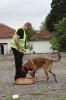 """Единадесети национален преглед за водачи на служебни кучета"""" - Берковица 2016 г. :: k16_92"""